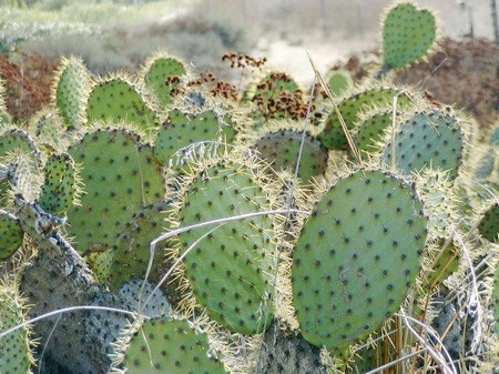 Types of cactus