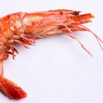 Types of Shrimp